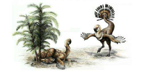 Dinosaur shook tail feathers for mating show