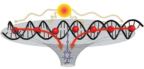 DNA constructs antenna for solar energy