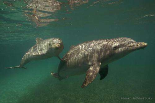 Dolphin genetic study provides revelations