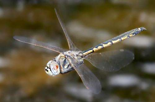 Dragonflies can see by switching 'on' and 'off'