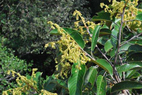 Drought makes Borneo's trees flower at the same time
