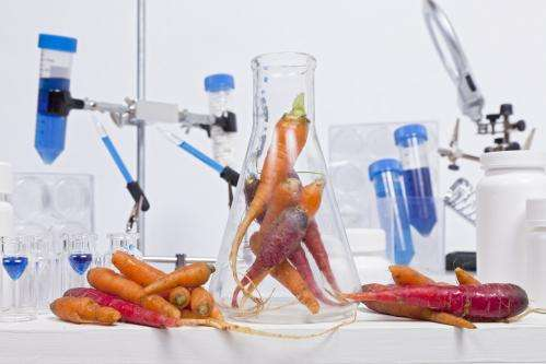 Drug against flu obtained from carrot