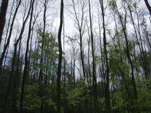 Emerald ash borer may have met its match