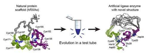 Enzyme created in test tube displays new structure, function