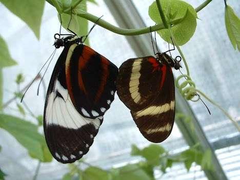 Evolution of new species requires few genetic changes