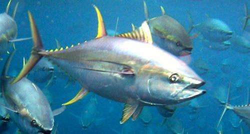 Extinction and overfishing threats can be predicted decades before population declines