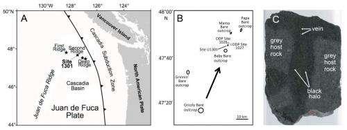 Microbes surviving deep inside oceanic crust