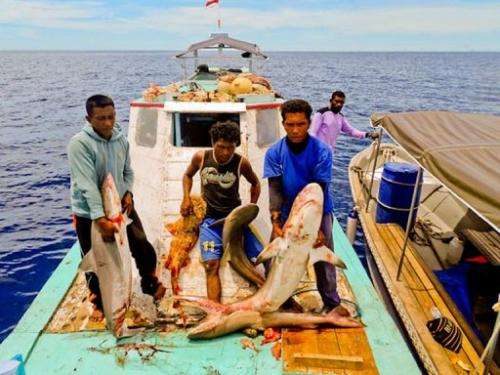 Fishermen hold carcasses of dead sharks caught in Raja Ampat, Indonesia's West Papua province