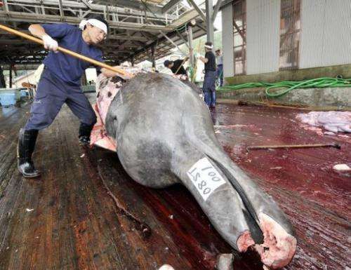 Fishermen slaughter a bottlenose whale at port, east of Tokyo, on June 25, 2008