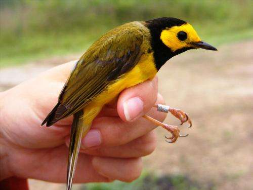 Forest-interior birds may be benefiting from harvested clearings