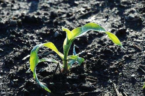 For farmers, plenty of uncertainty accompanies planting season