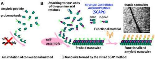 Formation of functionalized nanowires by control of self-assembly using multiple modified amyloid peptides