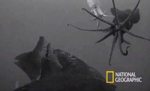 Biologist gets a squid's eye view (w/ video)