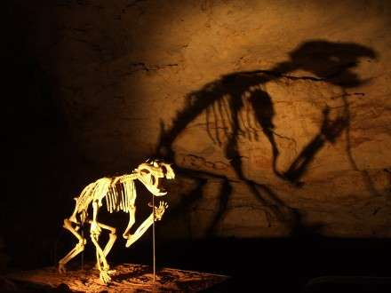 Giant Australian animals were not wiped out by climate change