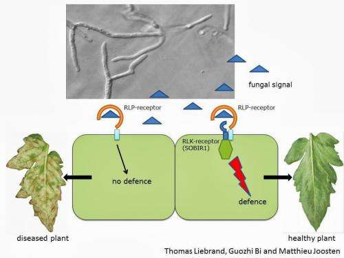 Great mystery of a plant defence pathway unravelled
