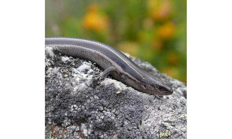 Hatchling lizards are smarter than you think