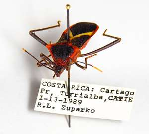 Help wanted: Public needed to uncover clues in bug collections