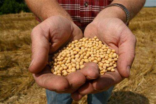 High-stakes fight over soybeans at US high court