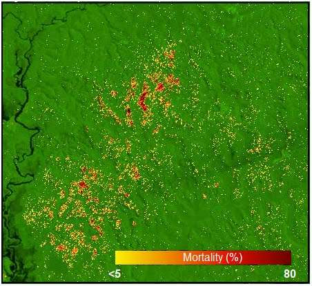 New research will help shed light on role of Amazon forests in global carbon cycle