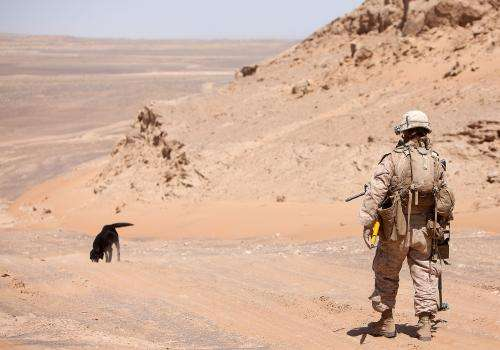 Improving dogs' ability to detect explosives