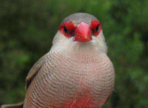 In birds, personalities can be a question of weather