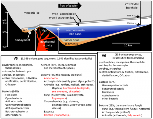 In subglacial lake, surprising life goes on: Team identifies species in most inhospitable realm