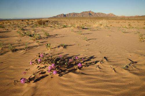 Invasion in the desert: Why some plant specie