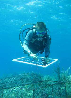 Large study shows pollution impact on coral reefs -- and offers solution