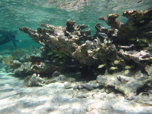 Lessons for our reefs in Caribbean study