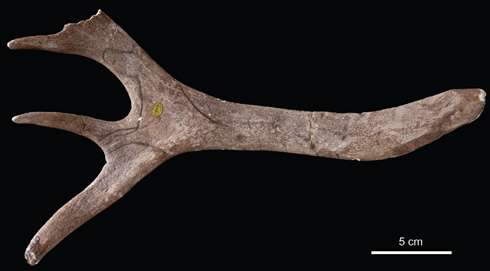 Lost and found, the first find of an early human artwork