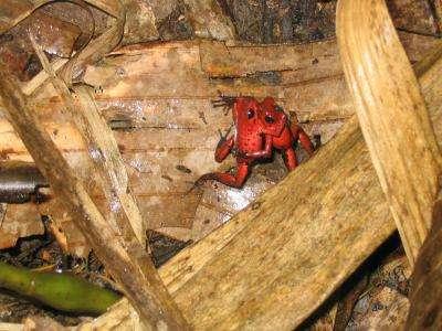 Lovelorn frogs bag closest crooner