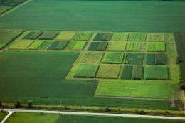 Lower nitrogen losses with perennial biofuel crops