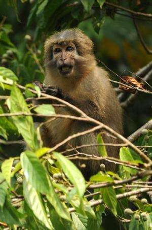 Monkey nation: Study confirms wealth of primates in Tanzania