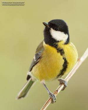 Nature versus nurture -- better looking birds have healthier babies