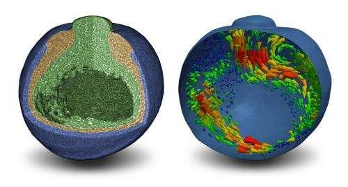 Nature: X-ray Tomography on a Living Frog Embryo