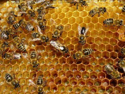 Nearly 1 in 3 U.S. Honeybees Lost in Winter 2012-13