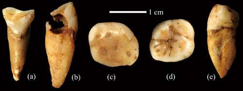New homonin site found in Daoxian County, Hunan Province of China