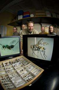 New species of wasp named after Wright State entomologist