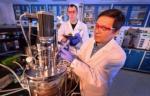 New yeast strain could lower costs for cellulosic ethanol production