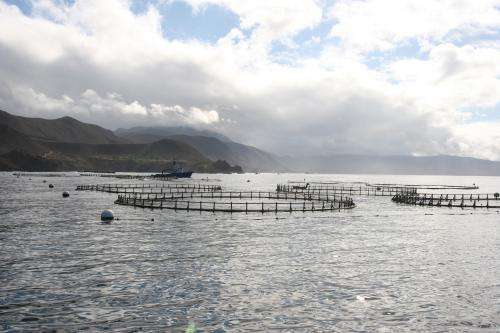 NOAA: Coastal ocean aquaculture can be environmentally sustainable