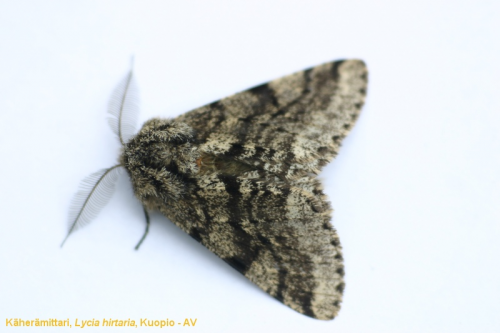 Northern moths may fare better under climate warming than expected