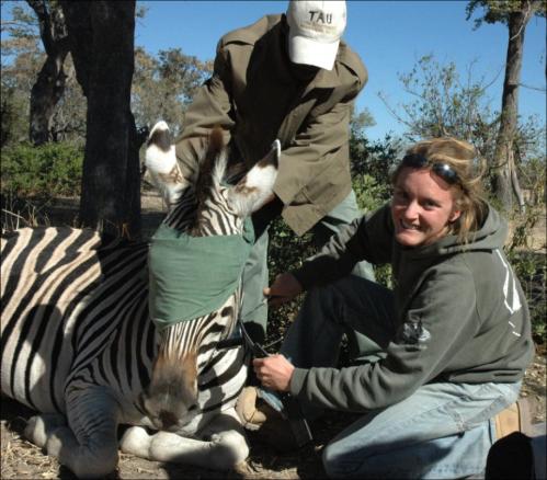 Of stars and stripes: NASA satellites used to predict zebra migrations