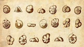 Paleoclimatology – revisiting a tiny prehistoric witness