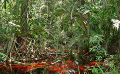 Peatland forest destruction raises climate concern