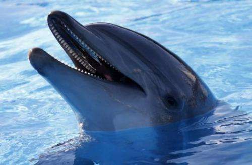 Picture of a dolphin at the Marineland animal exhibition park on December 19, 2012 in Antibes, southeastern France