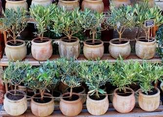 Precision irrigation for ornamental plant