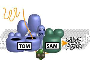 Protein team produces molecular barrels