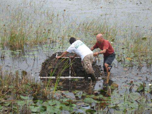 Pythons, lionfish and now willow invade Florida's waterways