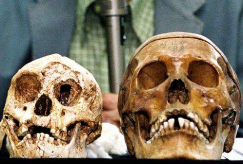 Remains of Indonesia's hobbit-sized humans (L) and modern human (R) in Yogyakarta, on November 5, 2004