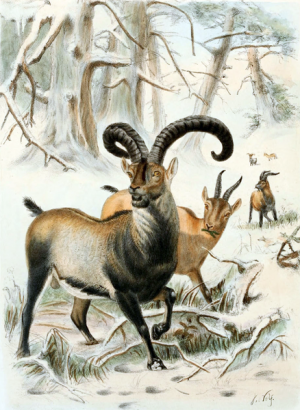 Researchers in Spain to attempt to clone extinct mountain goat